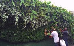 Foto parede Verde