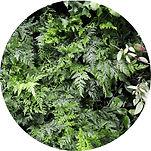 Jardim_Vertical_Hidropônico.jpg