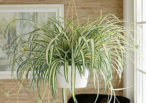 Plantas para apartamento pendente