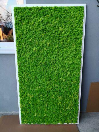 Quadro Musgo Moss Wall Decorativo
