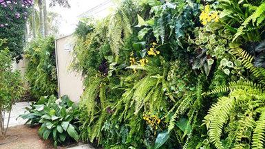 Parede Verde Natural