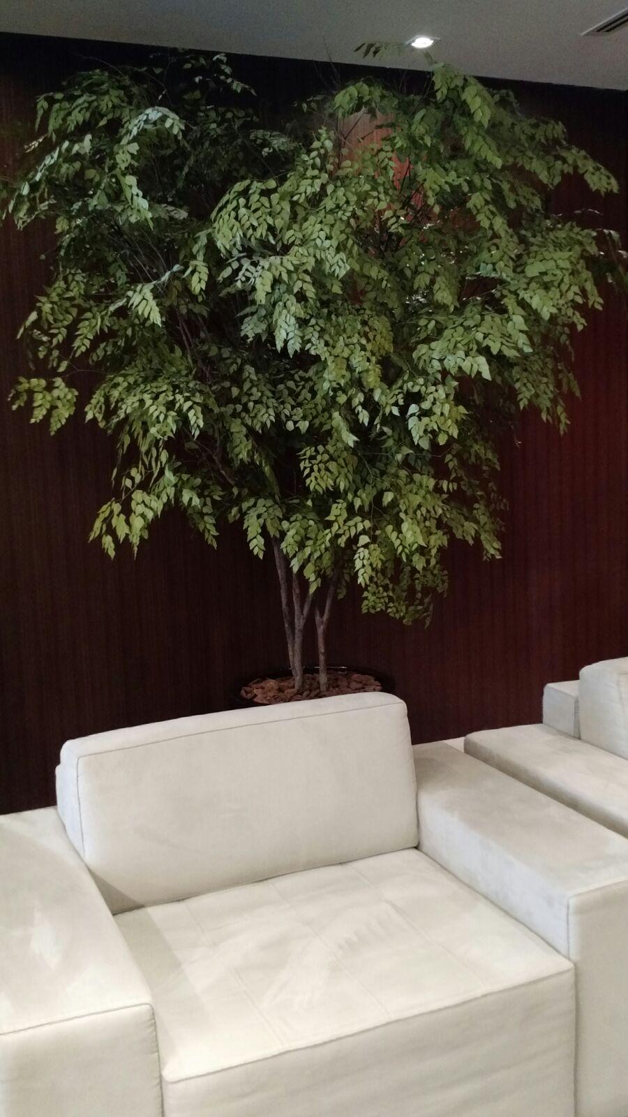 Árvore Preservada em Loja
