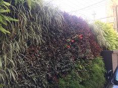 Foto Muro Verde Natural