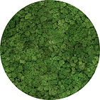 Detalhe Painel de Musgo Moss Vertical Garden