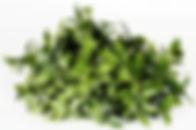 Vertical_Garden_-_JVAI22_2_-_foto_Sim∆