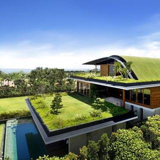 Projeto de Telhado Verde orgânico