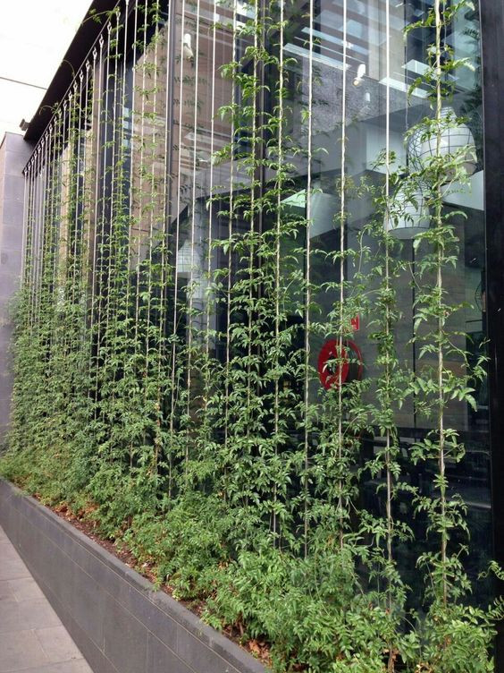 Jardins Verticais e Cortina Verde