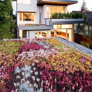 Flores em Telhado Ecológico