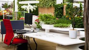 Paisagismo corporativo: como deixar espaços mais saudáveis e produtivos