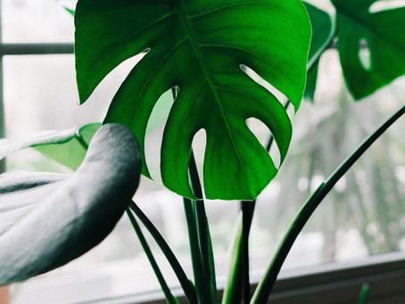 Urban Jungle – Wie sich Pflanzen positiv auf Deine Raumenergie auswirken