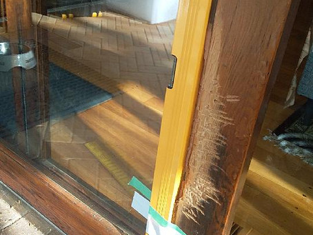 Has the dog chewed on wood around your home?