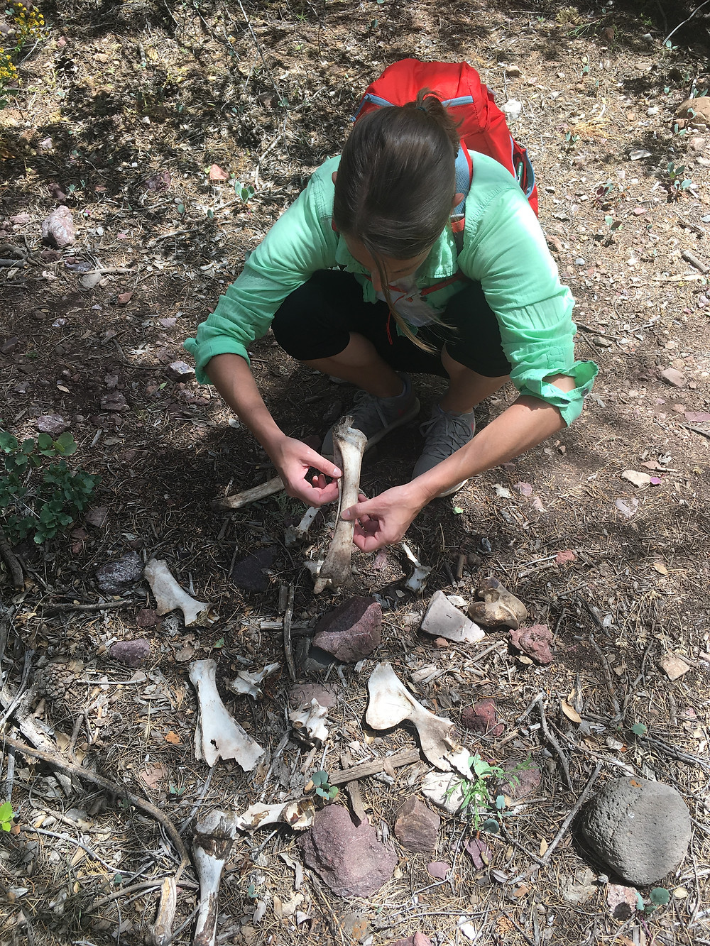 My examining some animal bones while on a hike in Arizona