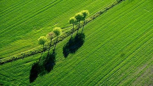 GrønmarkTræ.jpg