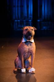 Dog Wedding Portrait Lanari Photography
