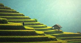 agriculture-1807581_1920.jpg