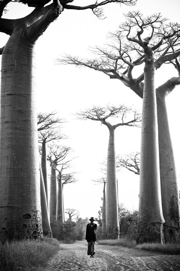 Baobab Begins