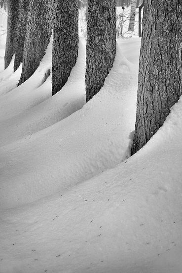 Stromořadí - zima