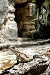Mayan Ruins 2015