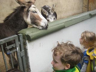 Vauxhall City Farm Trips