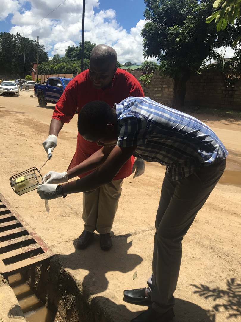 Field staff collect a sample from an open drain in Lusaka.