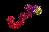 NLRP3-protein.jpg