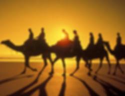 camel580.jpg
