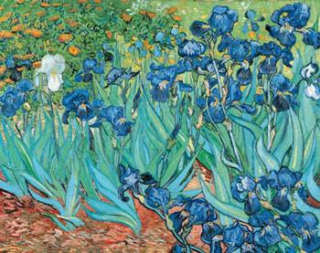 Van Gogh- iris.jpg