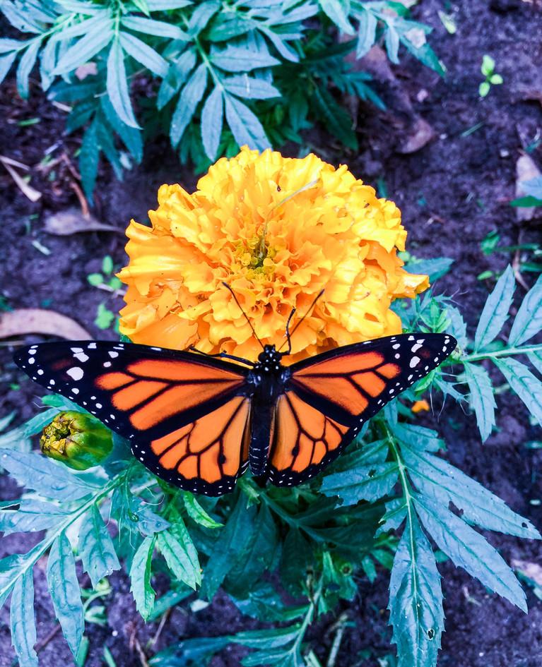 Flora libre 2.jpg