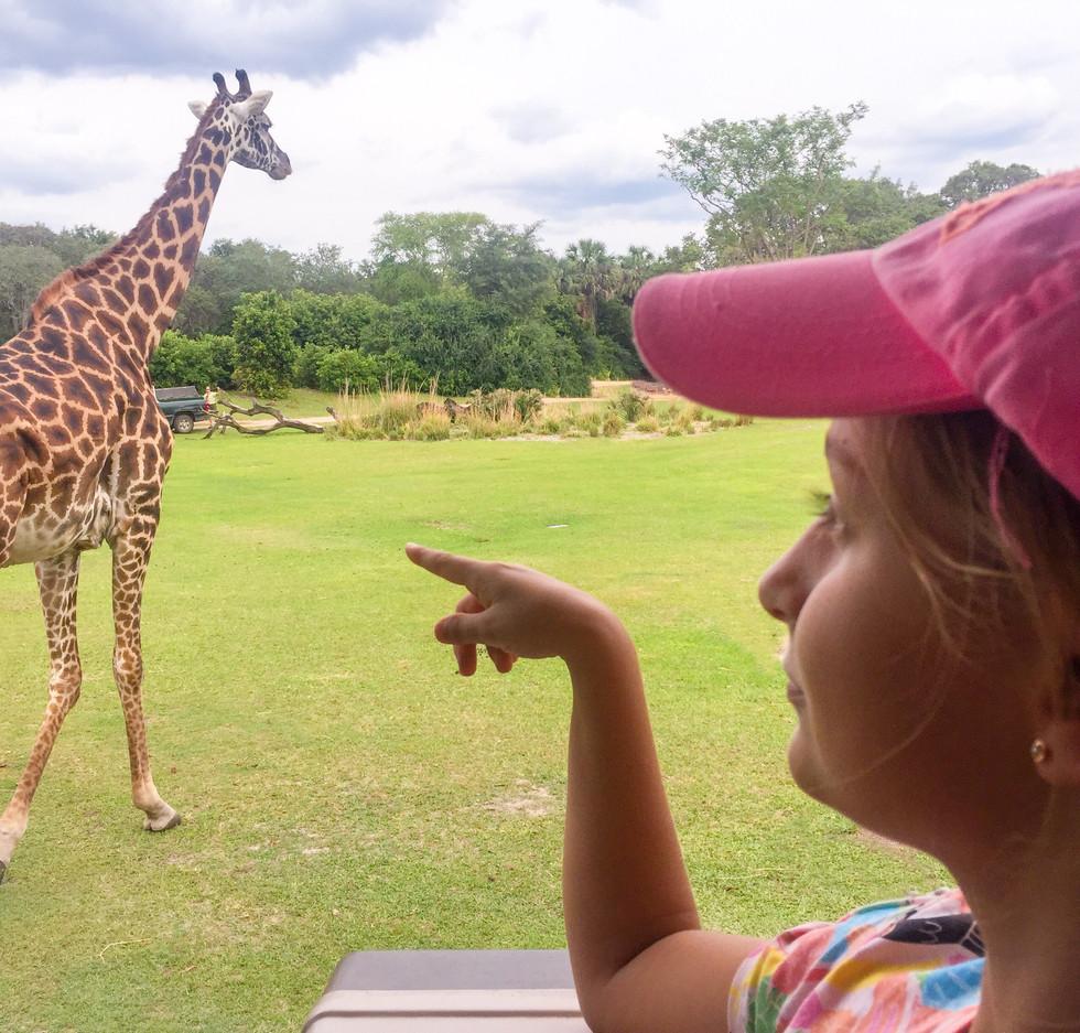 Safari jirafa.jpeg