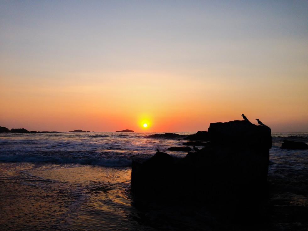 311214 pajaros sunset.JPG