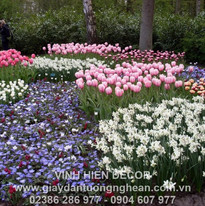 daffodils_tulips_flowers_spring_park_flo