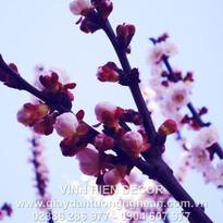 flowers_lavender_purple_sky_light_4240_1