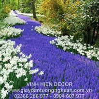 daffodils_muscari_road_shrubs_herbs_park