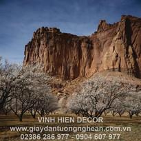 canyon_rock_garden_trees_bloom_spring_10