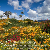 flowers_lawn_many_sky_nature_trees_29975