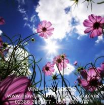 flowers_sky_sun_grass_beams_day_summer_8