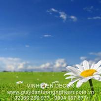 chamomile_field_sky_nature_sun_grass_239