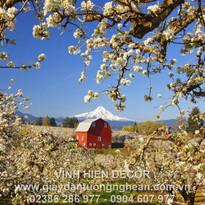 garden_spring_flowering_house_constructi