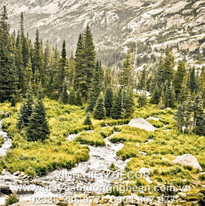fir-trees_trees_stream_river_source_ston