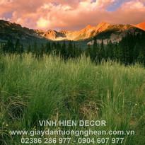 grass_wood_mountains_trees_field_evening