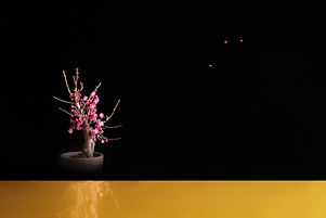 bonsai 03.jpg