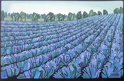 Lavender Fields (06)