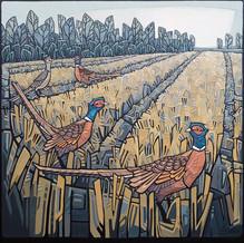 A Field of Pheasants