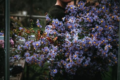Anemone & Artichoke - The Greenhouse