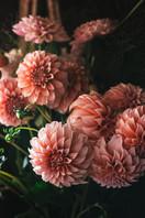 Anemone & Artichoke - Dahlias