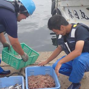 募集中 R4「漁業アカデミー」研修生