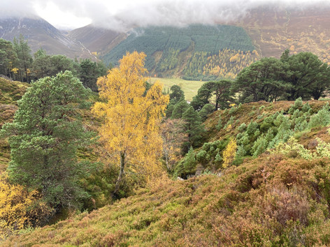 Autumn colours in Glen Feshie