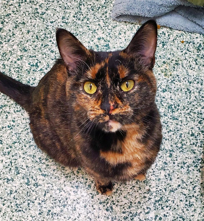 Gorgeous Dottie, two year old adult