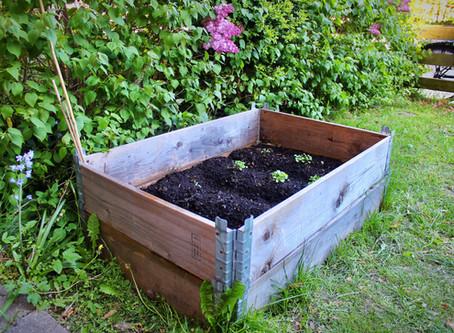 Garden Bed Planting