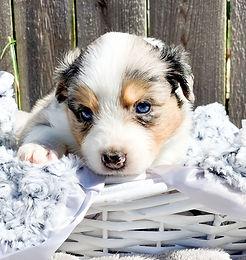 Puppies 2.jpeg